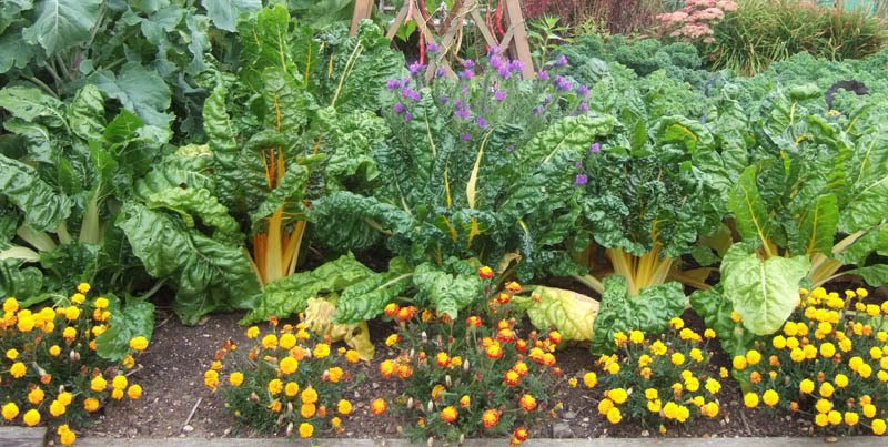 Consociação de plantas para a sua horta ou jardim