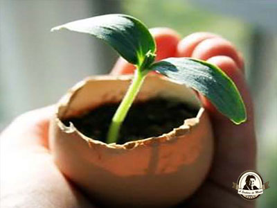 Crescer sementes em cascas de ovos
