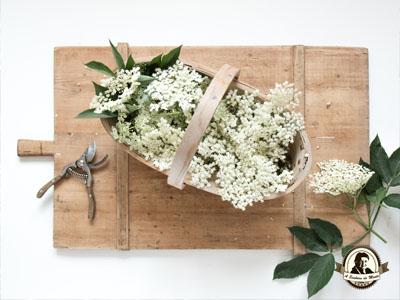 Tratamentos caseiros com flor de sabugueiro