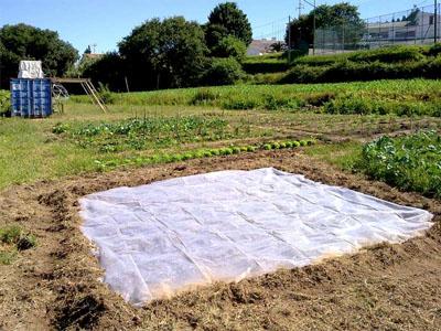 Já conhece o método de solarização?