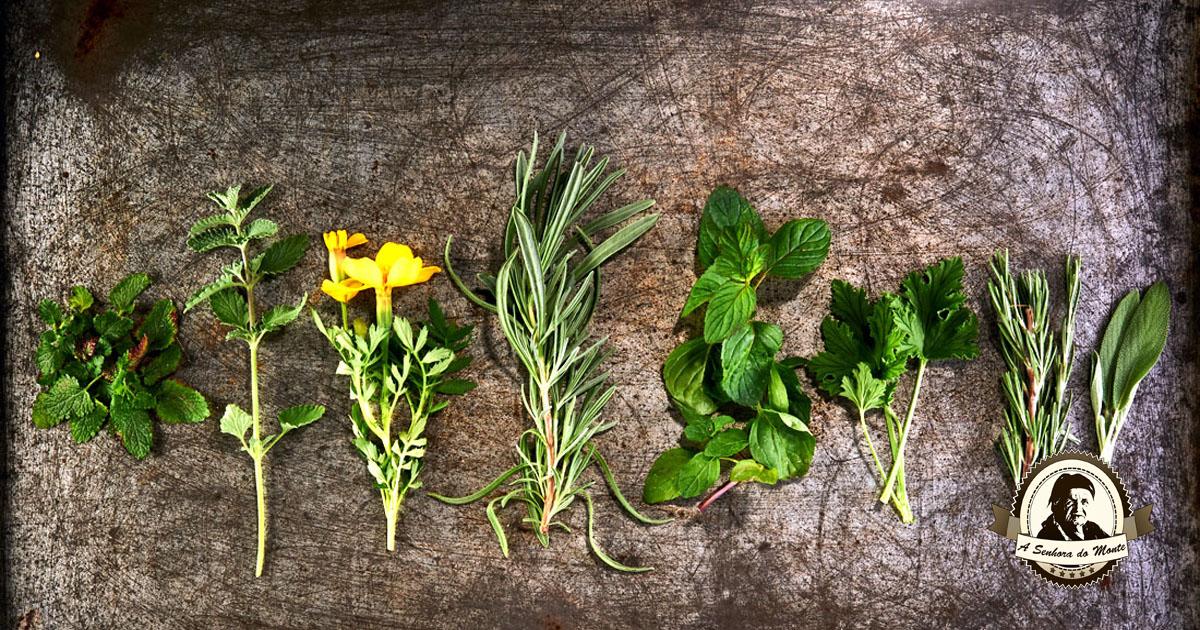 Plantas auxiliares para a sua horta