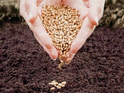 Como preparar as sementes antes de as armazenar