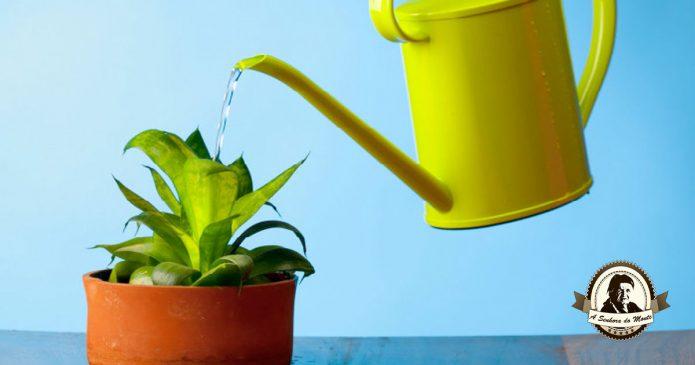 Aprenda a regar as suas plantas de forma adequada