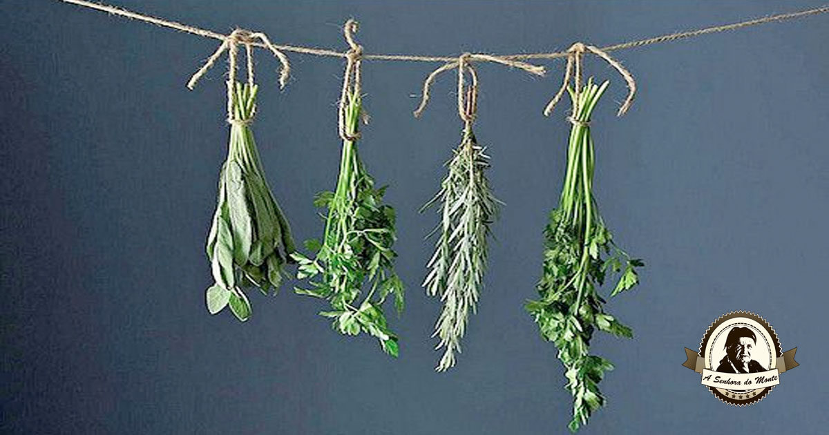 Colheita, secagem e armazenamento de plantas