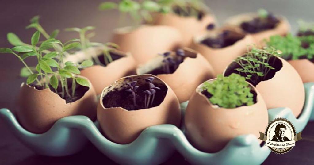 Sementeiras de cascas de ovos