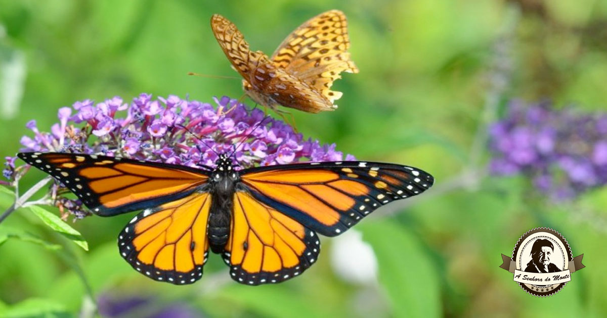Atraia insectos polinizadores para o seu jardim