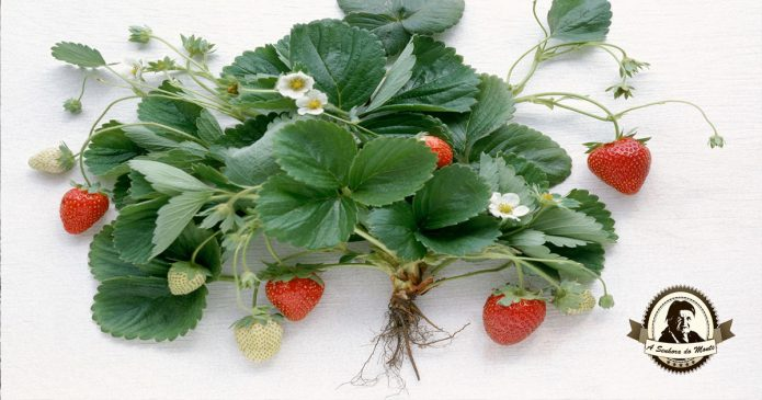 Como separar as raízes das plantas sem as danificar