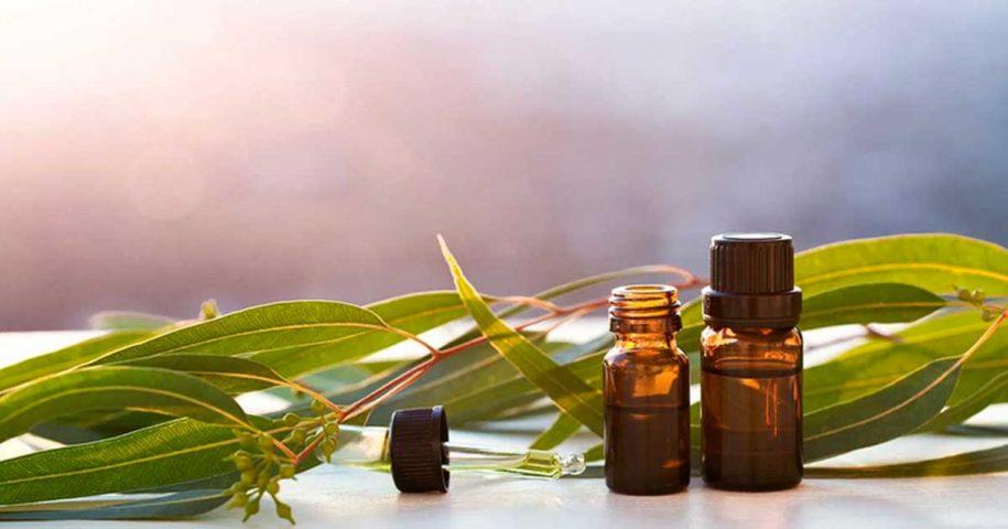 Óleo de eucalipto para combater constipações e dores nas articulações