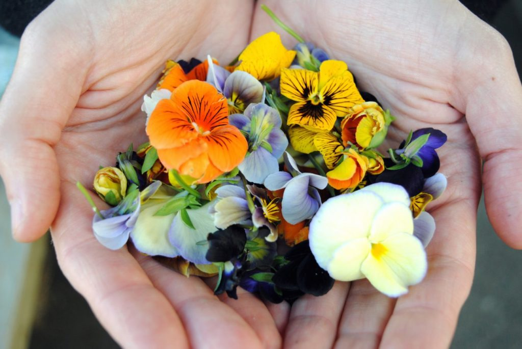 Sabiam que existem certas flores que são comestíveis?