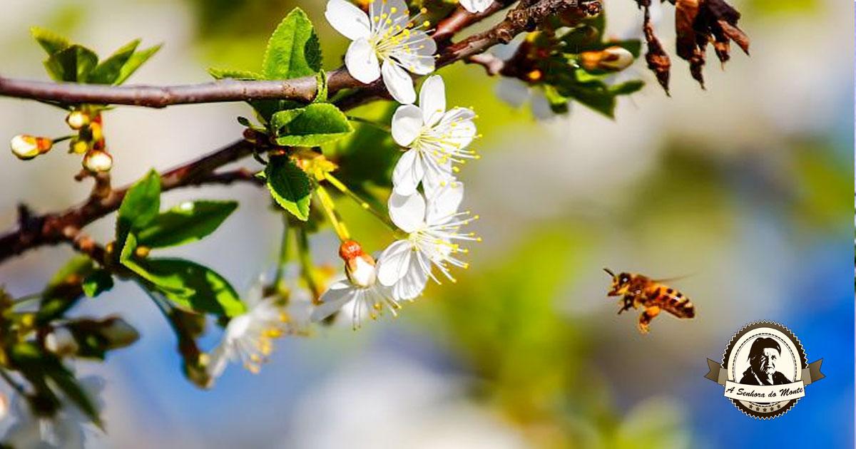 Pulverizador natural para atrair insectos polinizadores
