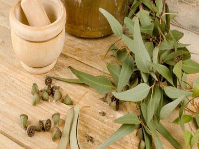 Óleo de eucalipto para combater constipações