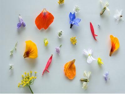 Pétalas de flores comestíveis