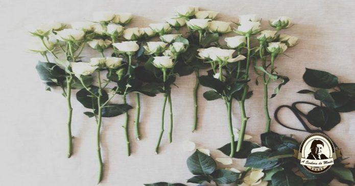 Propriedades e indicações terapêuticas - Rosas