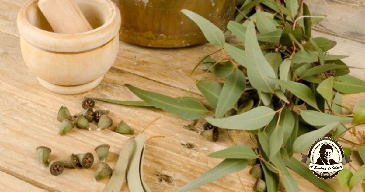 Aprenda a fazer óleo de eucalipto