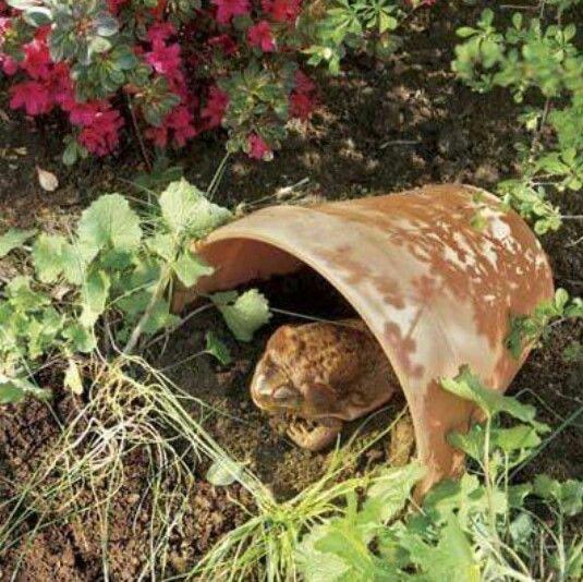 Sapos - guardiões do seu jardim