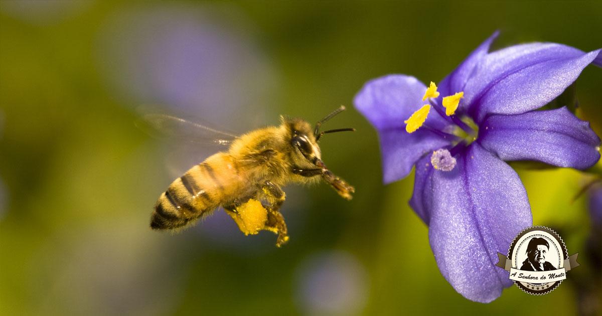 Flores que atraem abelhas