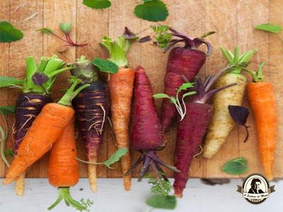 Benefícios das cenouras