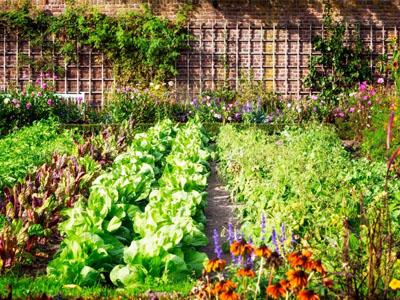 Qual o espaçamento entre plantas na sua horta