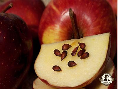 Sementes de maçã são tóxicas