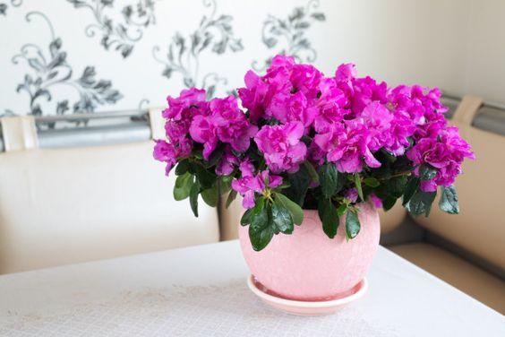 Aprenda a purificar facilmente o ar de sua casa com plantas