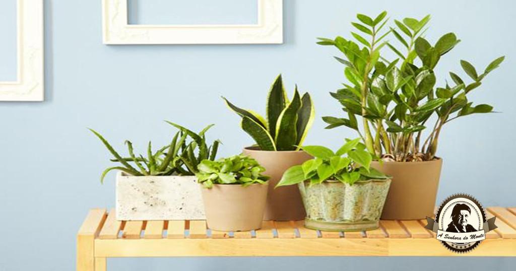 Purifique o ar de sua casa com plantas