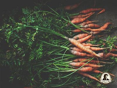Quando devo semear cenouras