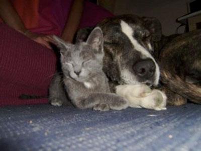 Alimentação saudável para animais de estimação