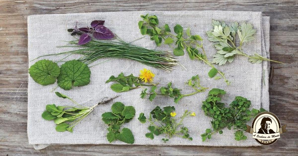Verduras selvagens comestíveis