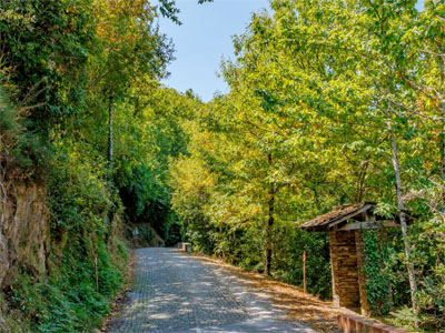 Conhece a verdadeira floresta portuguesa?