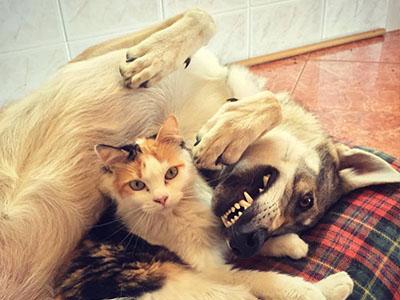 Coleira anti-pulgas para cães