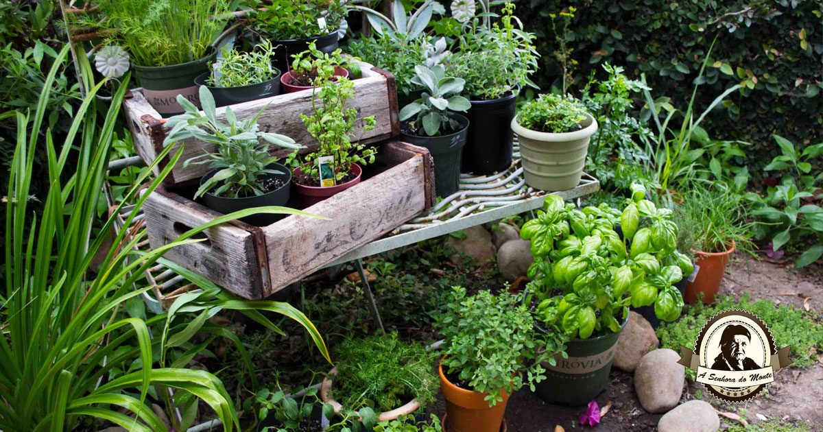 Plantas eficazes no tratamento de problemas cardiovasculares