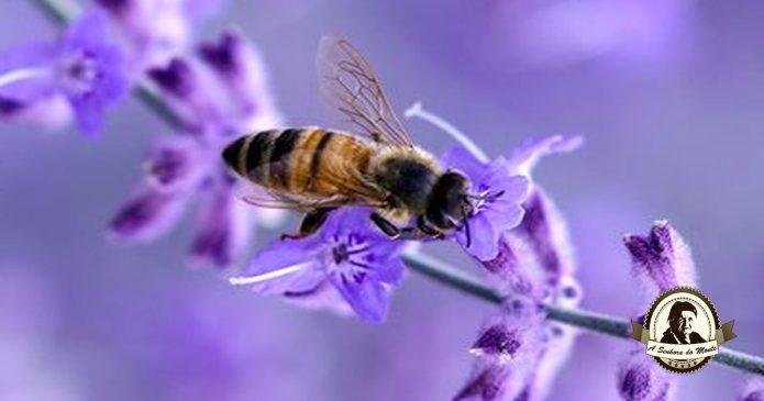 Como combater a extinção das abelhas