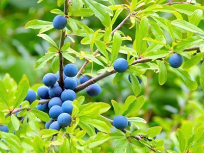 Aprenda que plantas são úteis em agricultura biológica