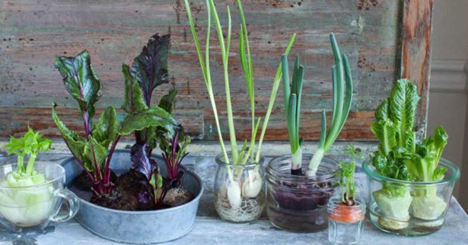 Vegetais que podem voltar a ser plantados depois de usados