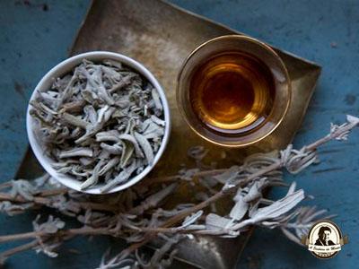 Chá de salvia