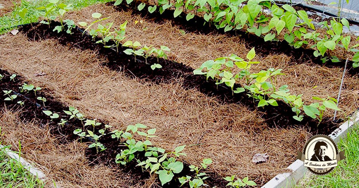 Mulching ou Cobertura morta de solo