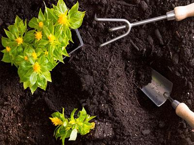 Adubo para plantas