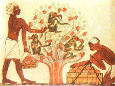 Os egípcios e os figos