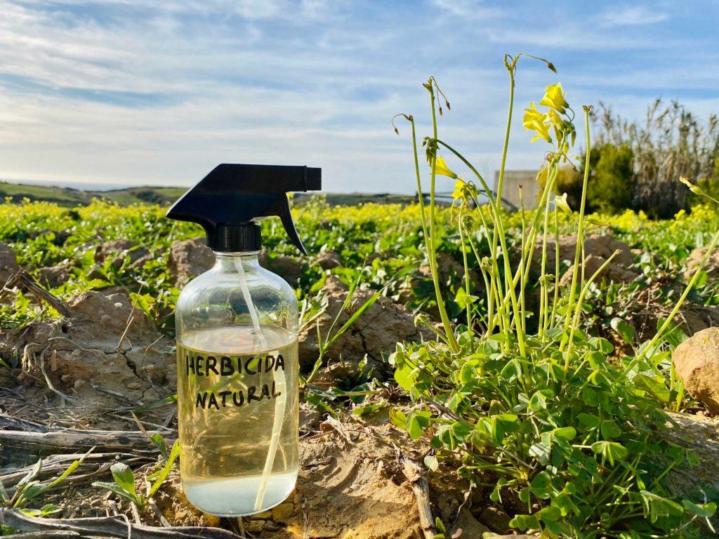 Aprenda a fazer um herbicida caseiro e natural de vinagre
