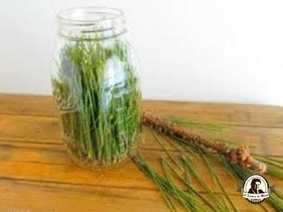 Vinagre de agulhas de pinheiro