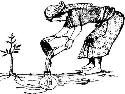 Método de irrigação com potes de barro