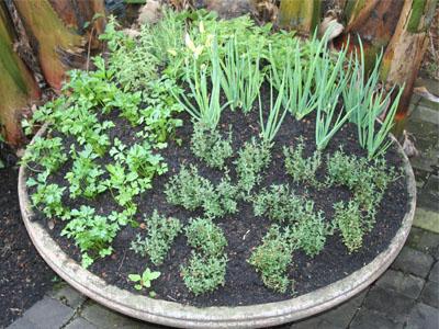 Sais Epsom para plantas novas