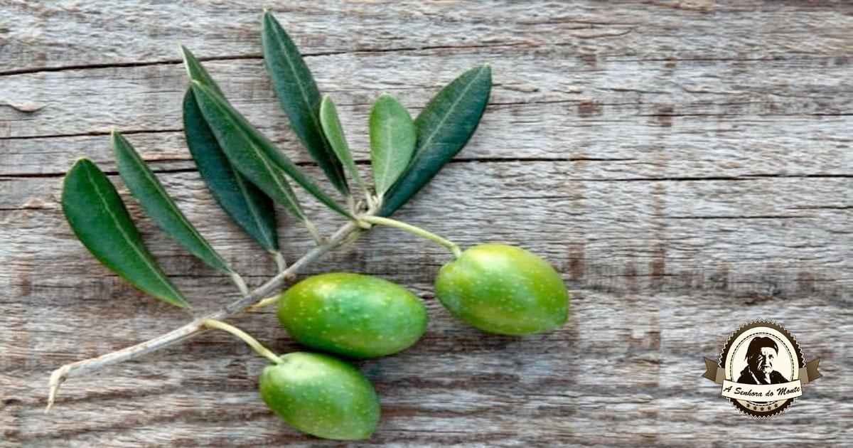 Chá de folhas secas de oliveira