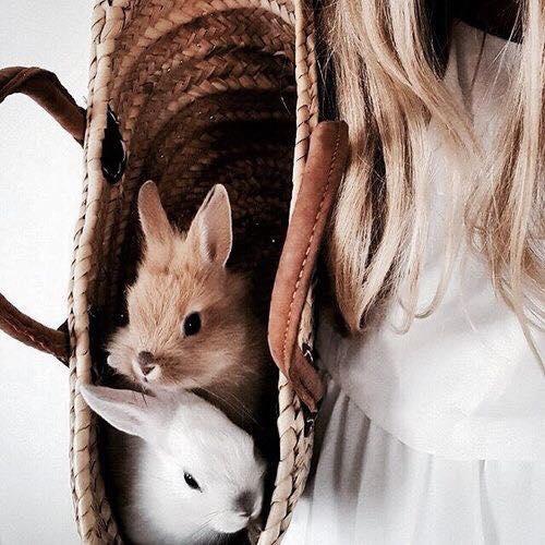 Conheça a lenda e a receita do Folar da Páscoa!