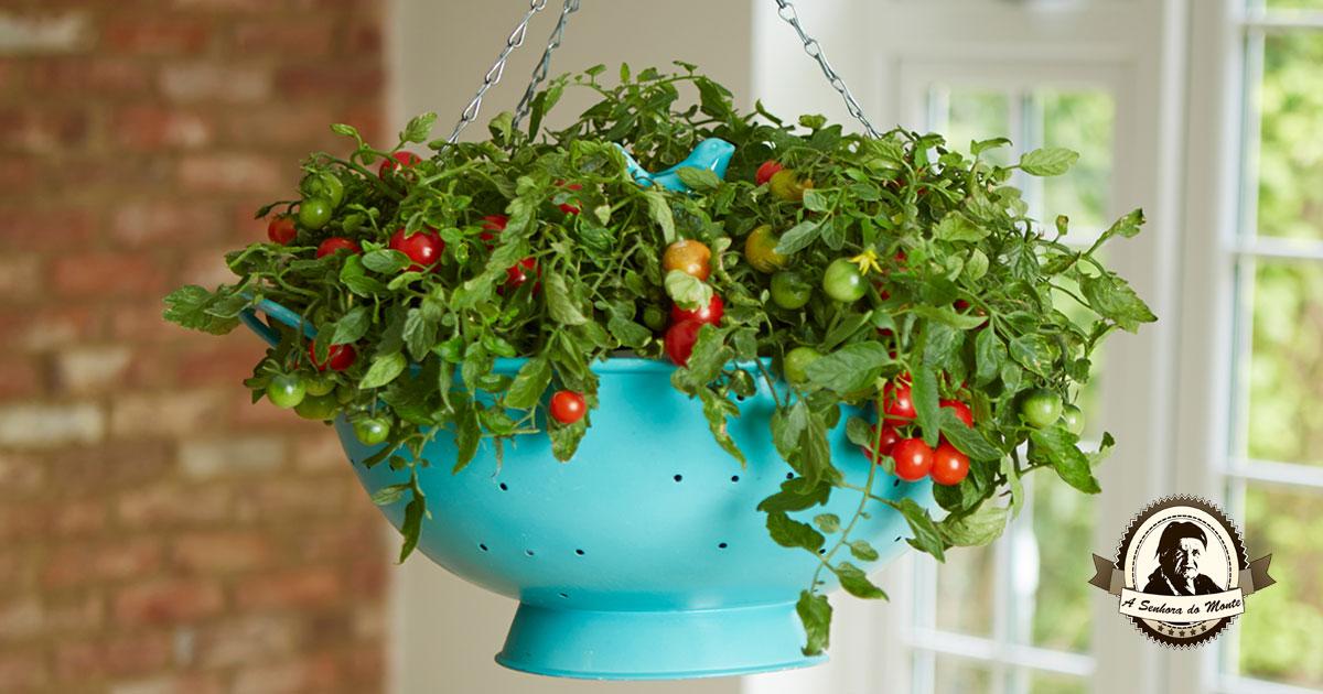 Famosos Aprenda a cultivar tomates em vasos IT01