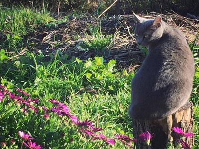 Gato na horta