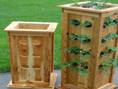 Plantar morangos de forma vertical