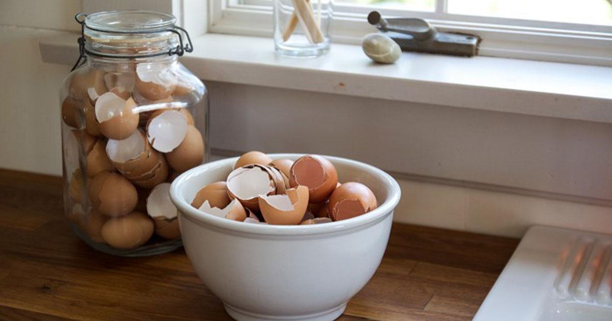 Não deite fora as cascas de ovos - aprenda a reutilizá-las!