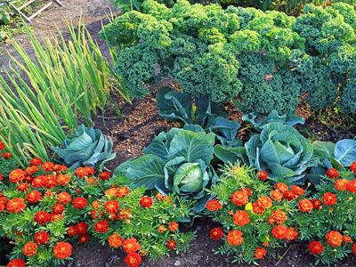 Aprenda a fazer um jardim comestível