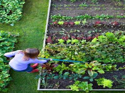 Respeite os espaços entre as plantas